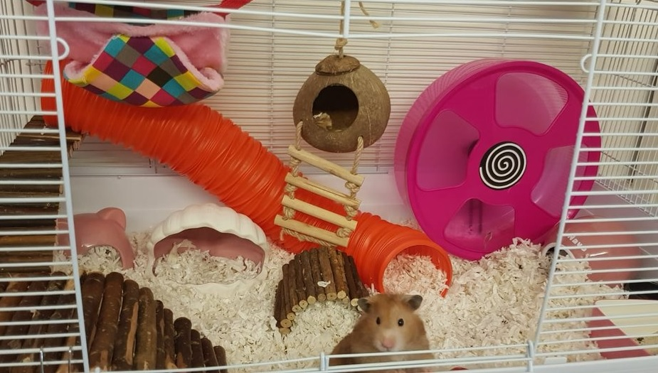 Hamster Bedding & Cage